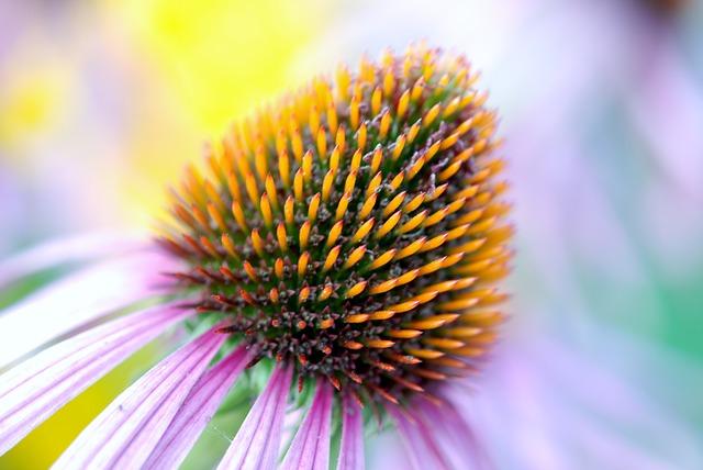 bloom-22786_640