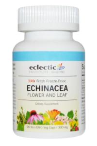 echinacea-flower-leaf